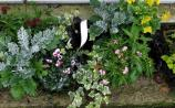 Last chance to get planters and window boxes dressed for the winter