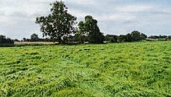 Kildare Property Watch: Substantial block of land in Carbury on sale for €200,000