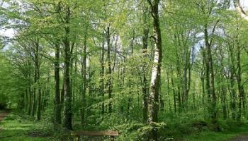 Teagasc launches forestry photo competition – 'Celebrating Our Forests and Wood Use'