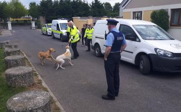Athy Gardaí and Kildare County Council's Dog Wardens Service seize stray dogs in operation yesterday