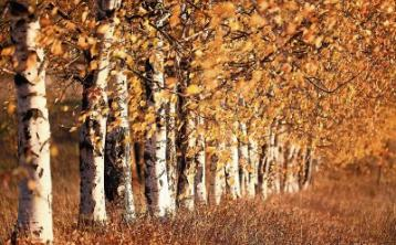Gardening with Jo: Trees for a reason this season